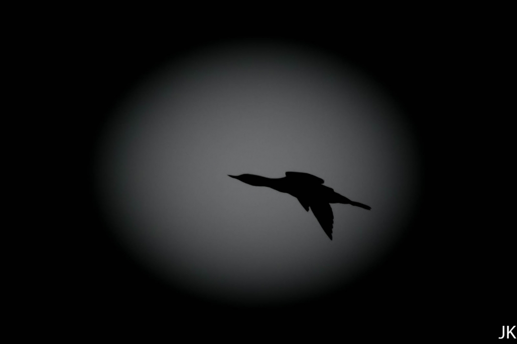 Kaakkuri Aikojen Alun Lintu Retkipaikka