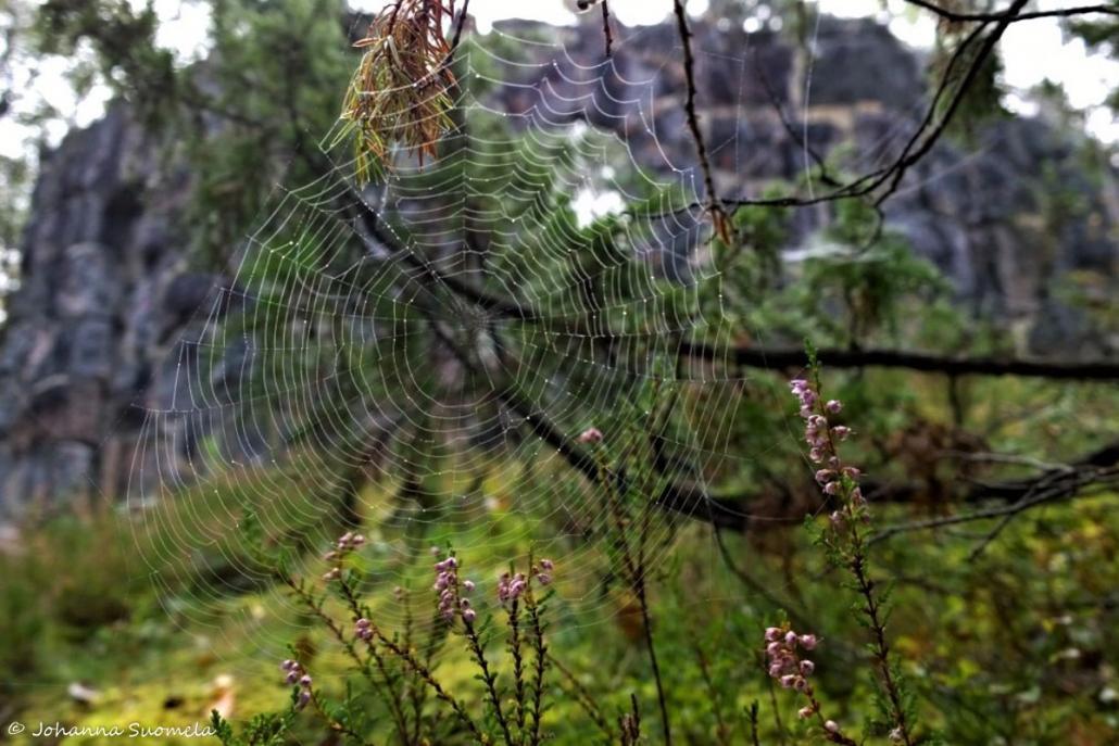 Stockmannin rauniot hämähäkinseitti