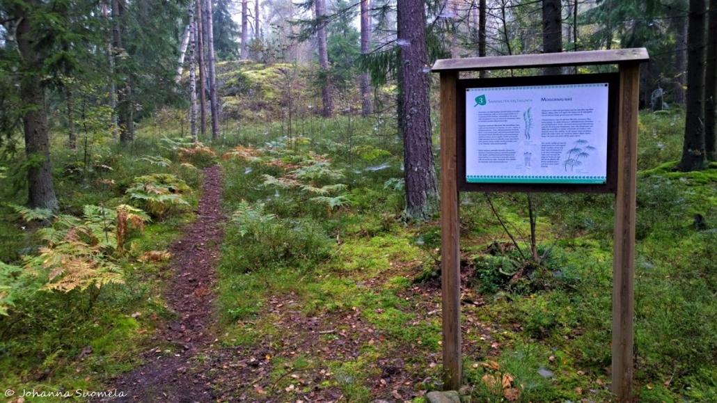 Polku Stockmannin raunioille lähtee Kauniaisten kuntoradalta opastetaulun numero kolme kohdalta
