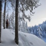 Hiekkavuoren Paratiisi Eli Nilsian Louhosareena Kuopio Retkipaikka