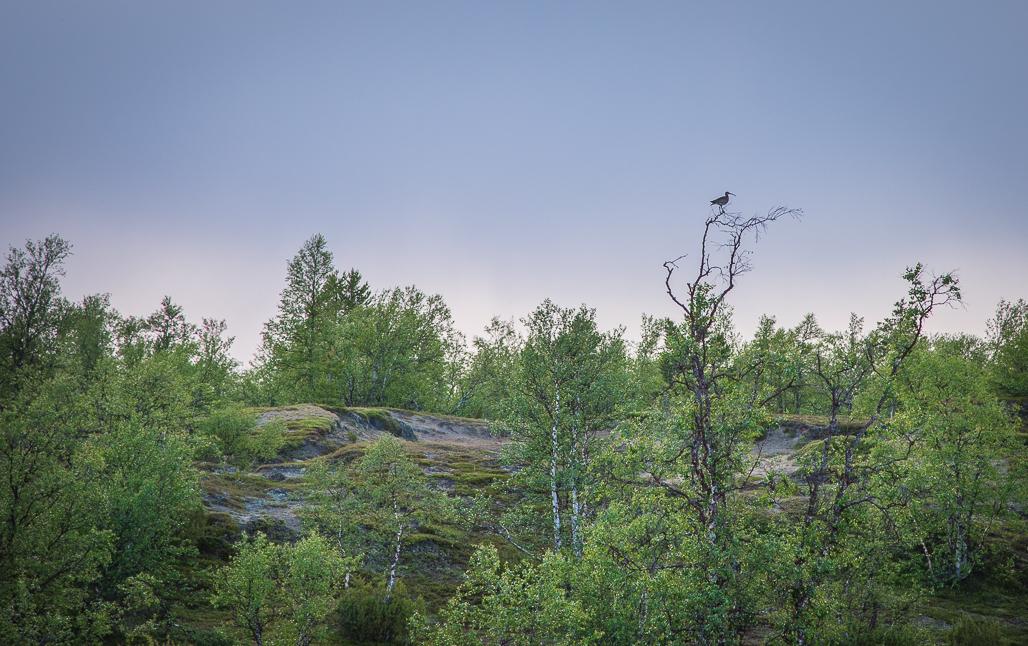 finest selection 1b6dc 70188 Kansallispuistot   Retkipaikka
