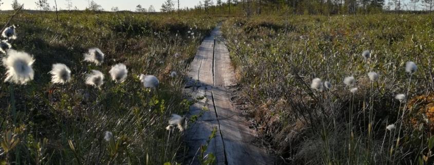 Kukonkylä Sievi