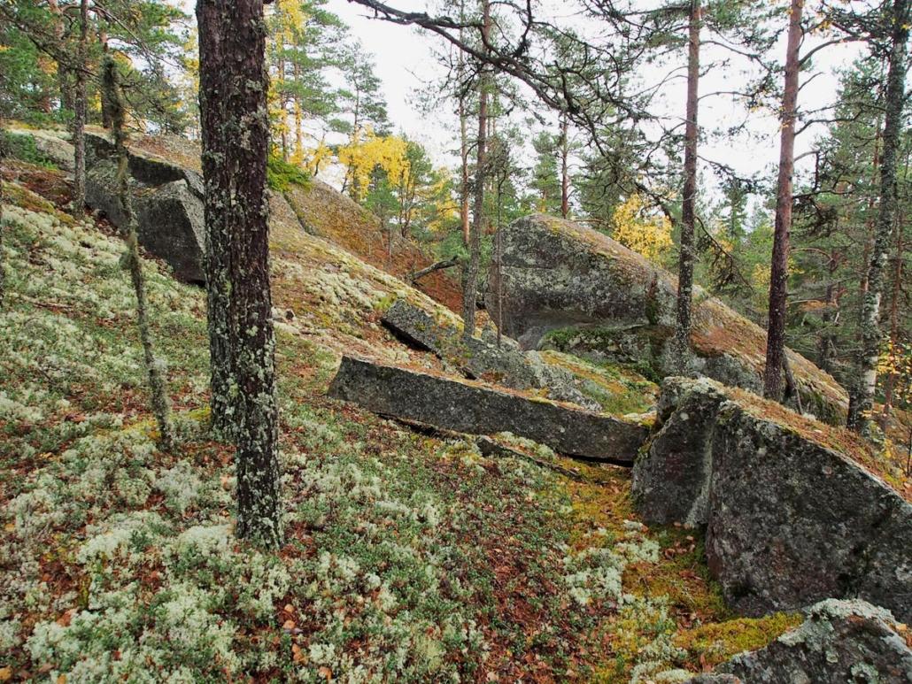 Vanhoja kivipalkkeja metsässä.