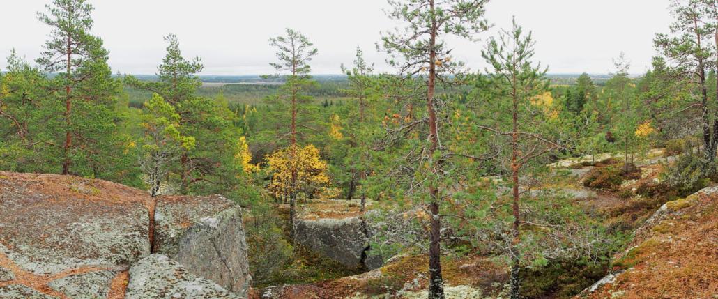 Maisemakuva harvapuustoiselta kalliolta.