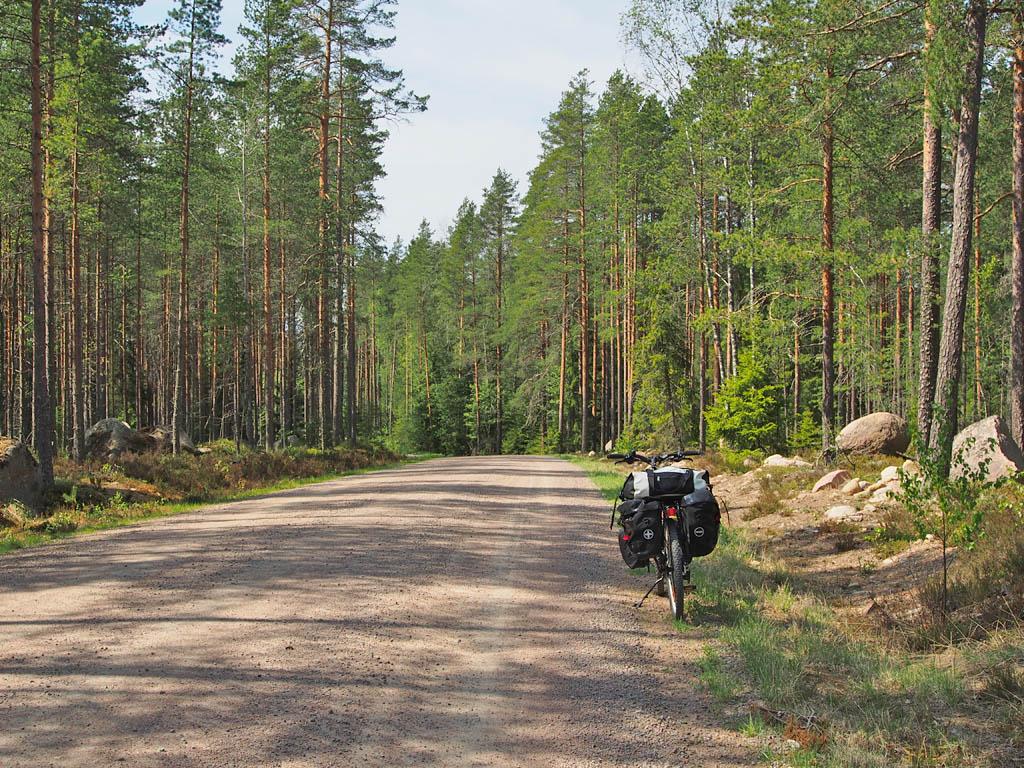 Retkipyörä metsämaisemassa