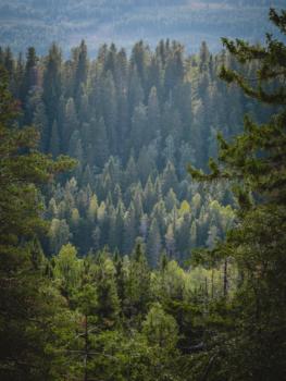 Pohjois-Karjala retkeilyhelmet Kuva: Terhi Ilosaari