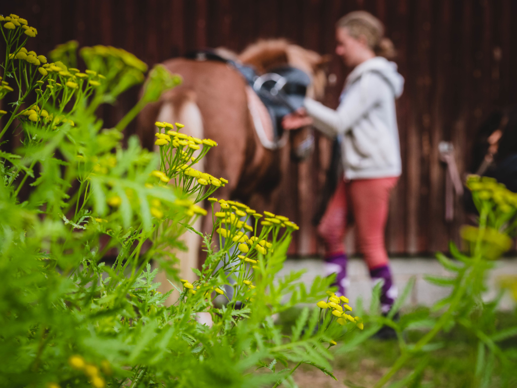 Hevosen huoltoa maastoretken jälkeen Kuva: Terhi Ilosaari