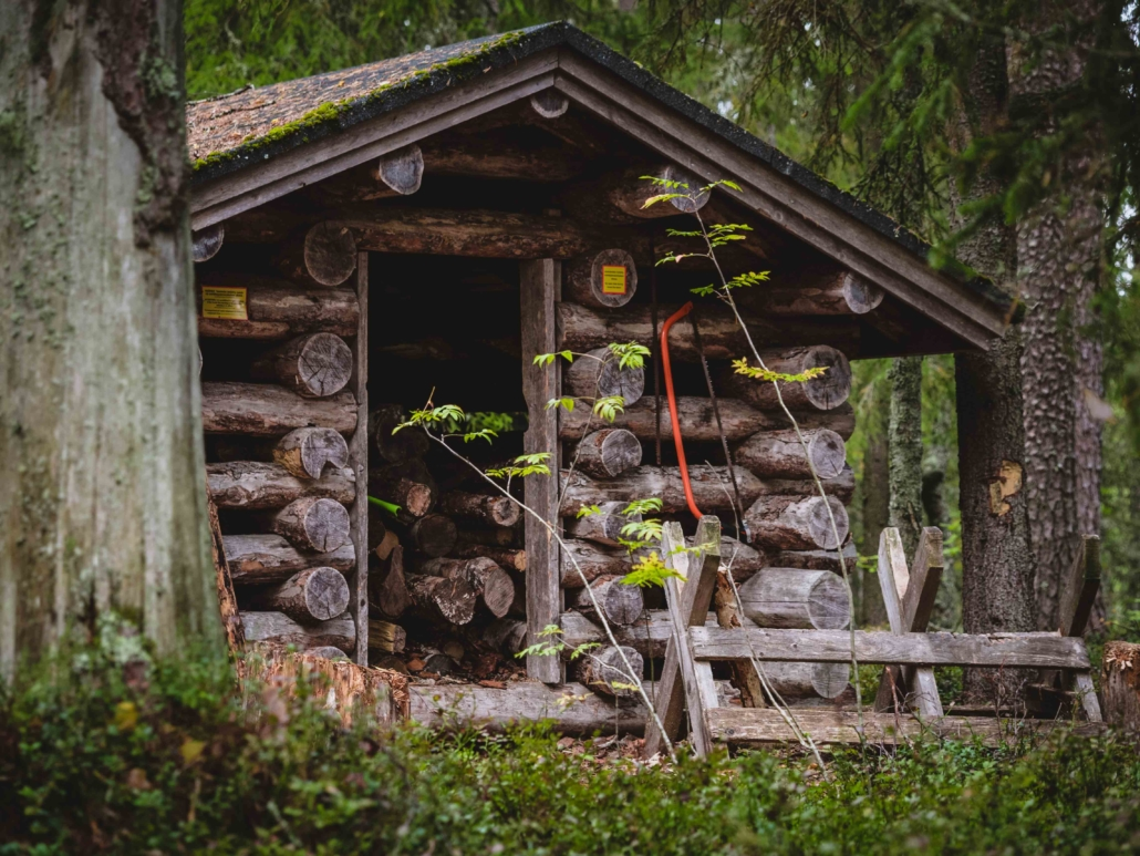 Ruunaa - puuvaja Kuva: Terhi Ilosaari