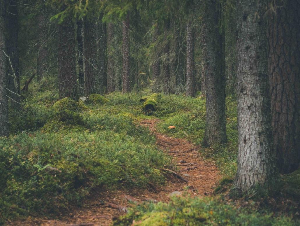 Ruunaan satumetsän polkua Kuva: Terhi Ilosaari