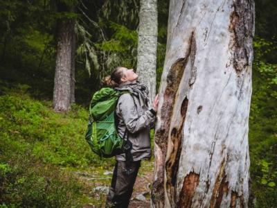 Ruunaalla puuvanhusta ihmettelemässä Kuva: Terhi Ilosaari