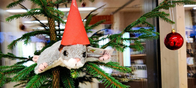 Haltia Shopin joulumarkkinat alkoivat  tässä 12 parasta...
