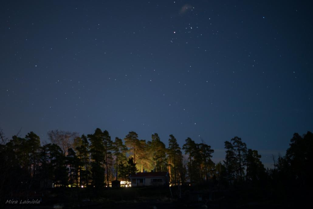 Tähtitaivas metsän yläpuolella