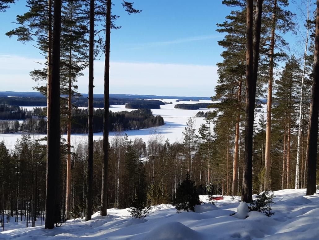 Talvinen maisema Puijon mäeltä Pohjois-Kallaveden järvelle ja saaristoon. Etualalla mäntyjä.