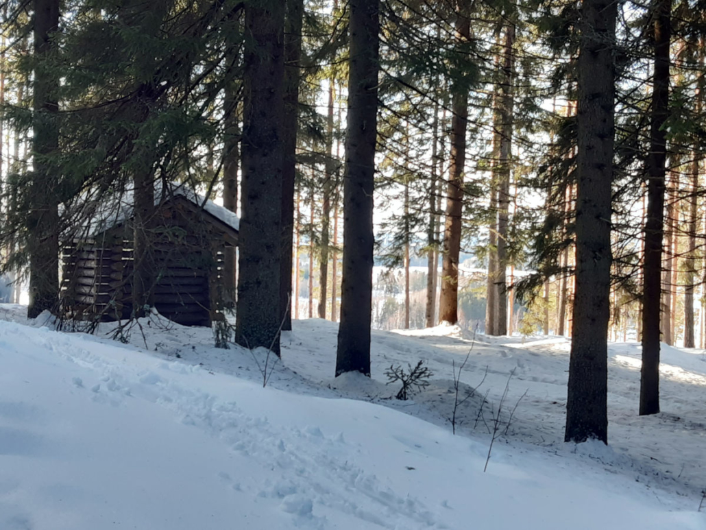 Lumisessa metsässä puuvaja. Kuusimetsä.