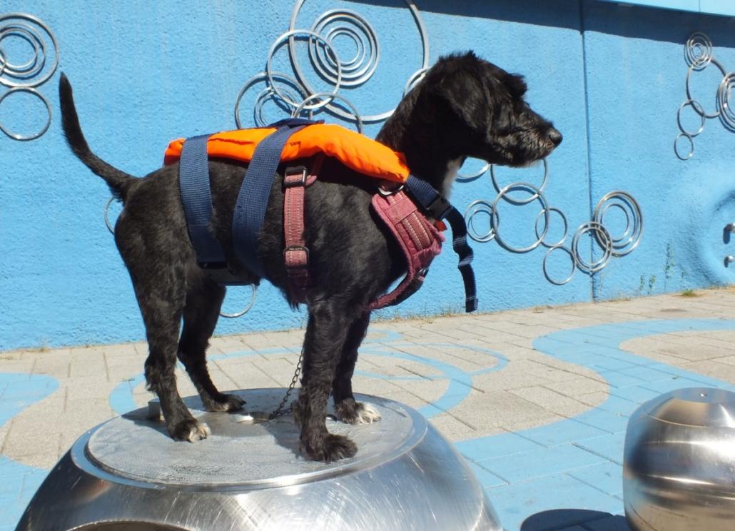 Koira Keilankannan kanvan ympäristötaideteoksen kanssa.