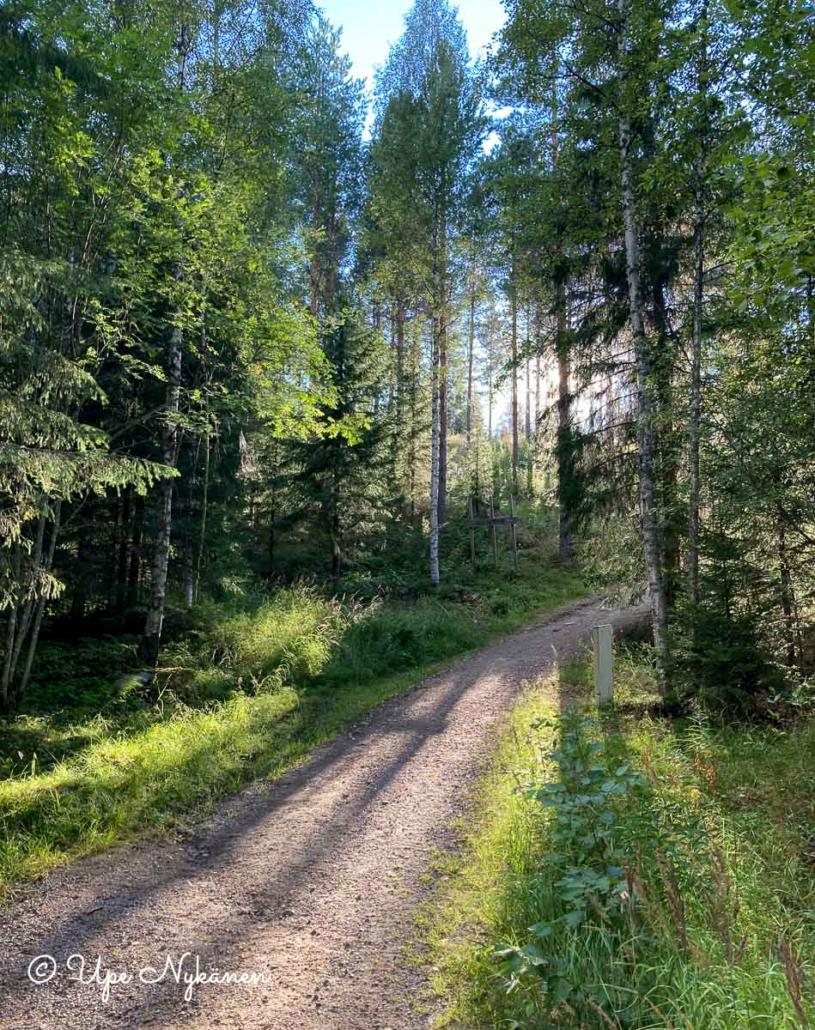 Metsä ympäröi sorapintaista Kirkkovuorelle kohoavaa polkua.